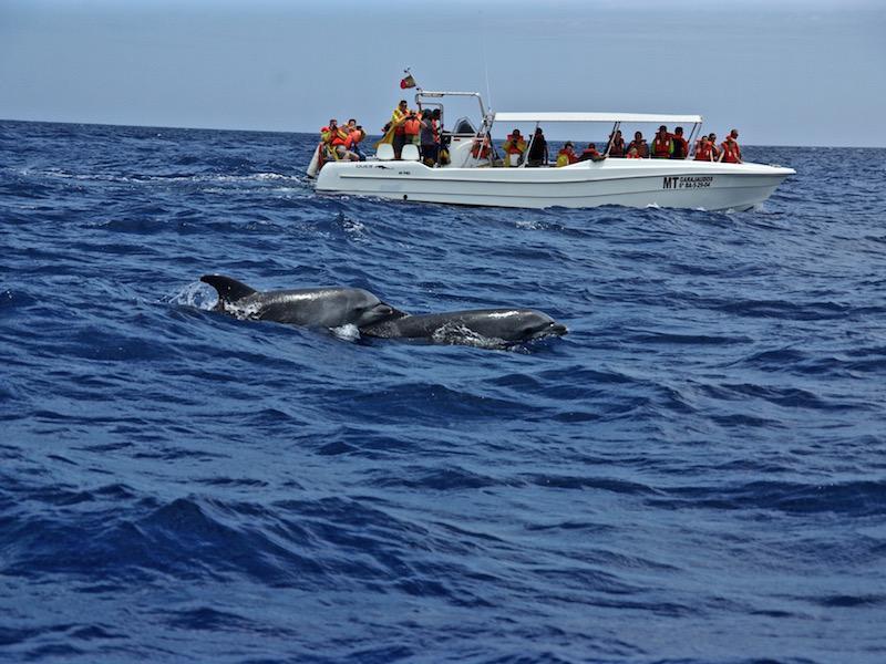 walvissen kijken op de azoren glasvezelboot