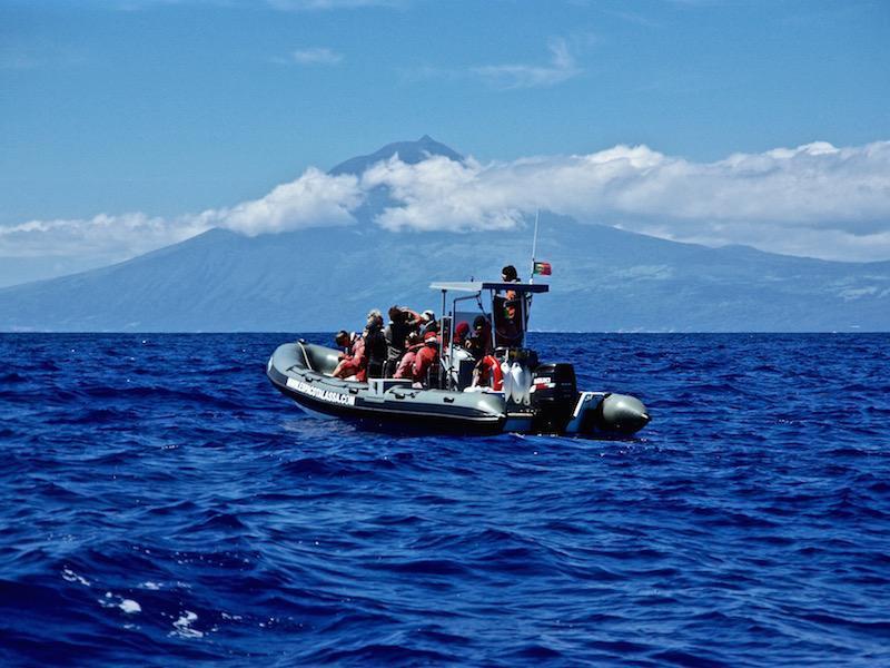 Walvissen kijken op de Azoren in een Zodiac
