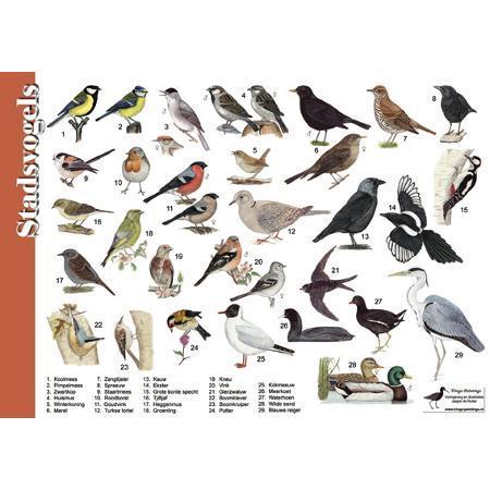 Herkenning stadsvogels