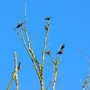 Vogelserie van Atlas Contact Uitgeverij
